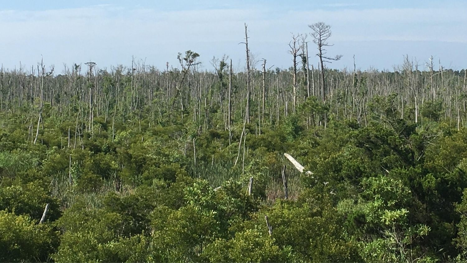ghost forest - Study Finds Ghosts Forest 'Tree Farts' Contribute to Greenhouse Gas Emissions - College of Natural Resources News NC State University
