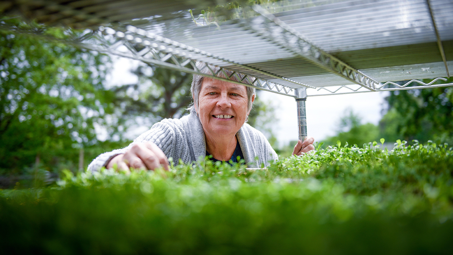 Greenhouse - Building a Case for Community Gardens - College of Natural Resources News NC State University