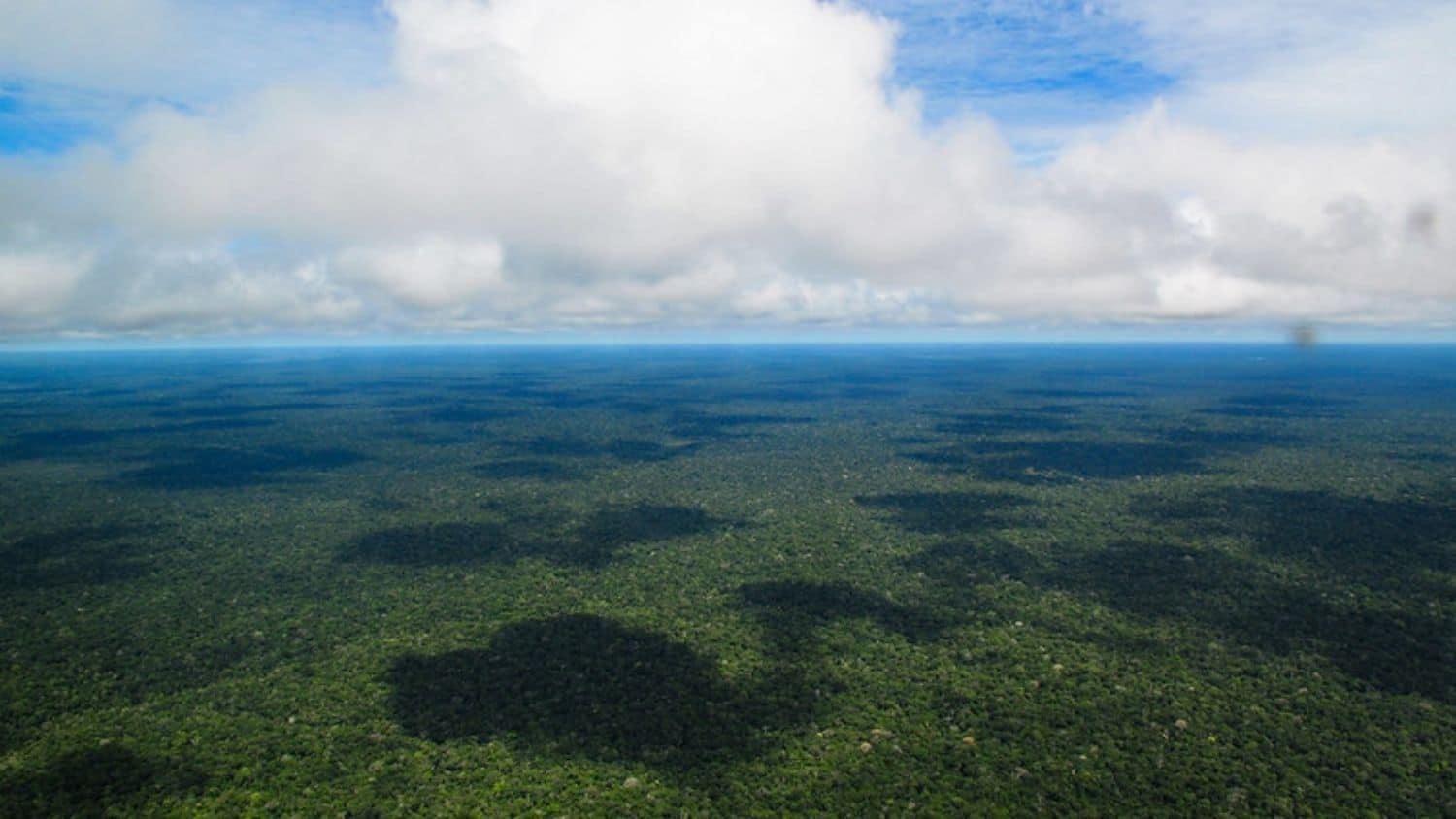 Aerial view of the Amazon rainforest - Saving Brazilian Amazon Sustainably Is a Team Effort - College of Natural Resources News NC State University