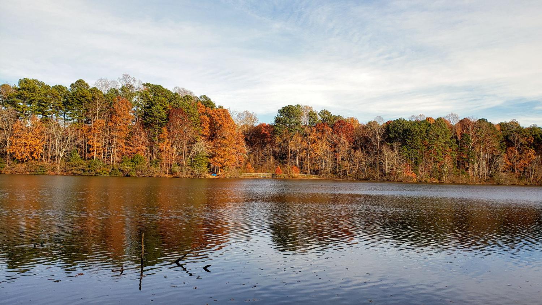 fall foliage along lake