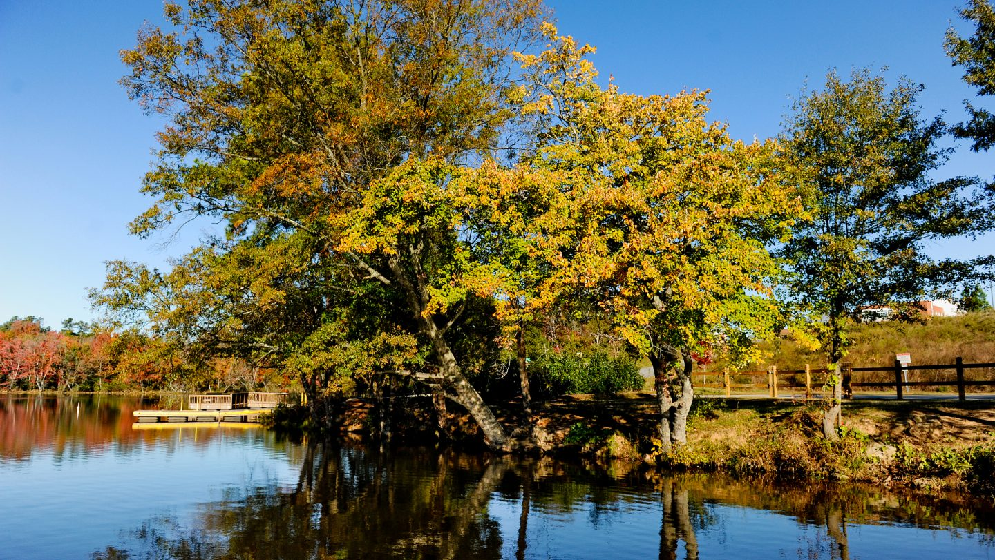 Fall Park Tree - Community Health and Well-Being - Parks Recreation and Tourism Management NC State