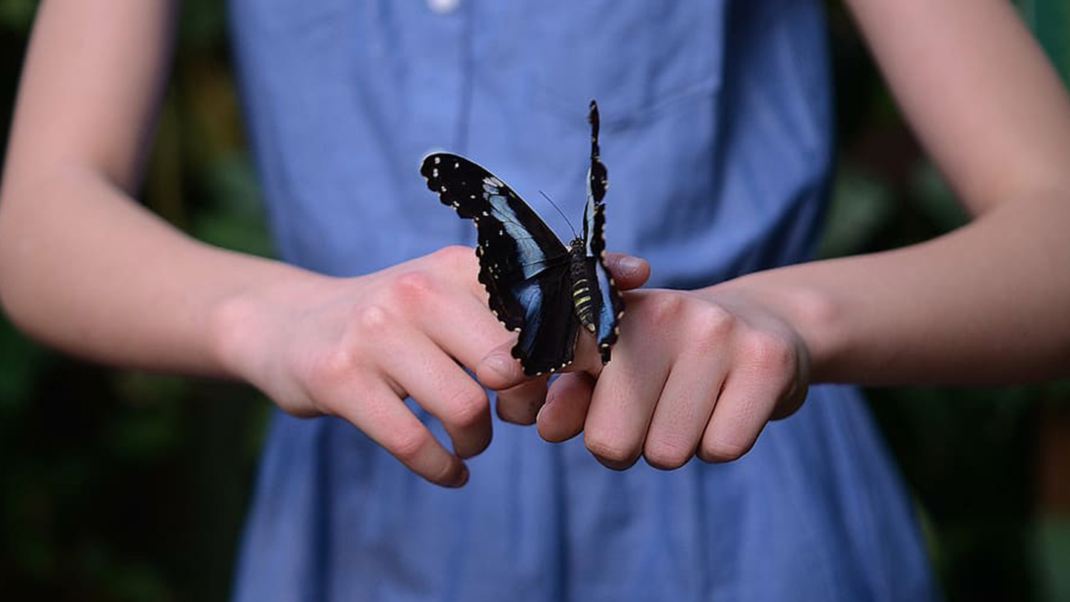 Kid with Butterfly - Extension and Outreach - Parks Recreation and Tourism Management NC State