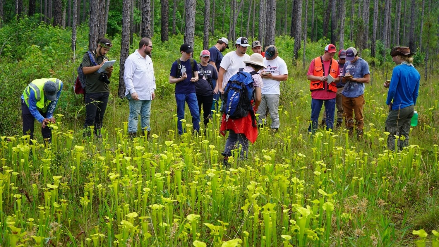 A Summer of Learning, College of Natural Resources, FWCB Summer Camp Pitcher Plants, feature