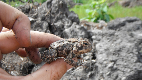 hand holding a toad