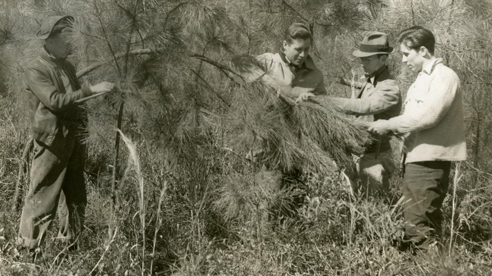 historical forestry students