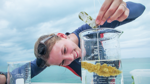 Environmental Sciences research in the Bahamas