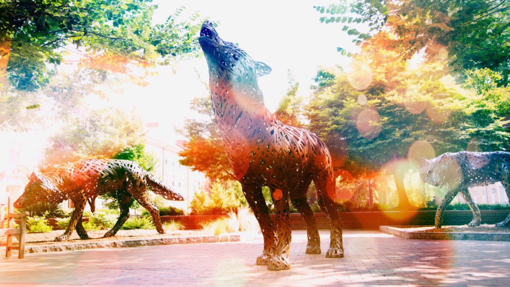 Think and Do the Extraordinary - Copper wolves on campus
