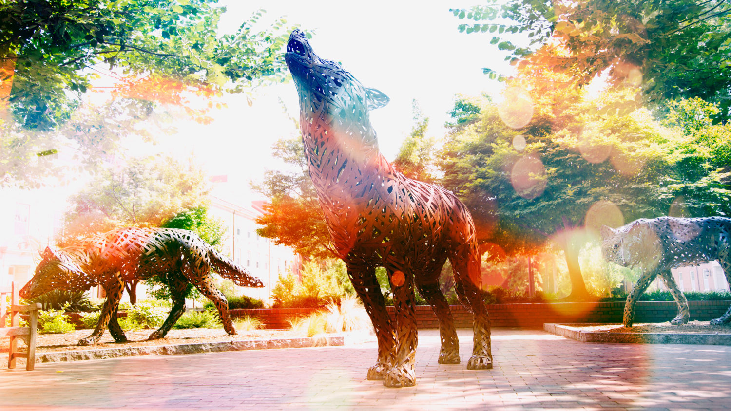 Think and Do the Extraordinary - Copper wolves on campus - Ways to Give - College of Natural Resources NC State University