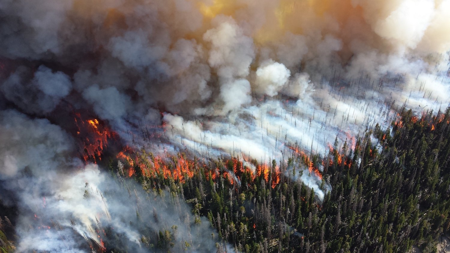 A wildfire burns a forest in the western United States.