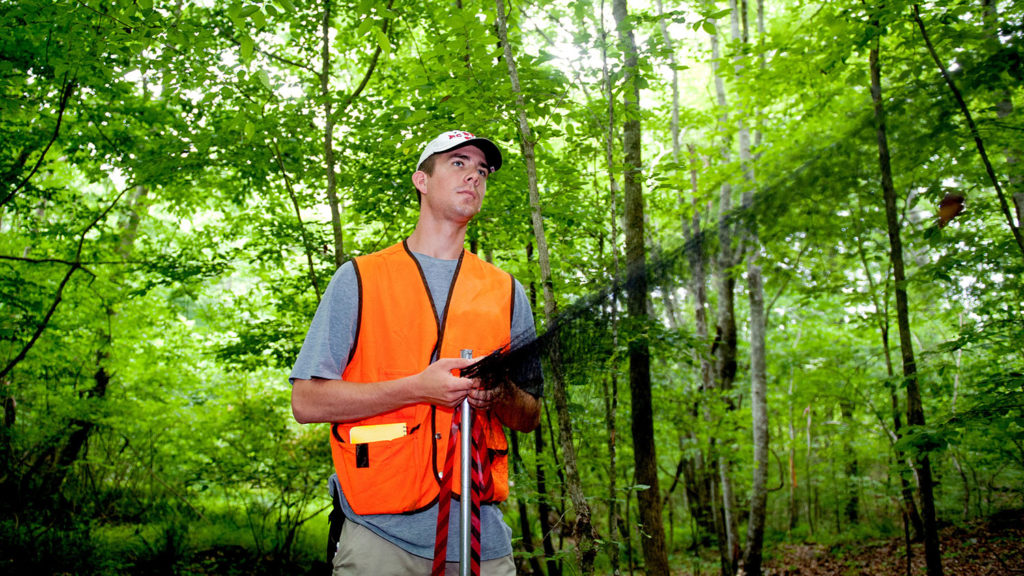 Student doing research in forest - Graduate - College of Natural Resources at NCState University