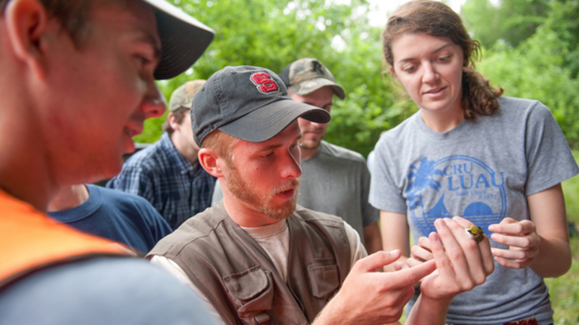 wildlife studying - Fisheries, Wildlife and Conservation Biology - College of Natural Resources at NCState University