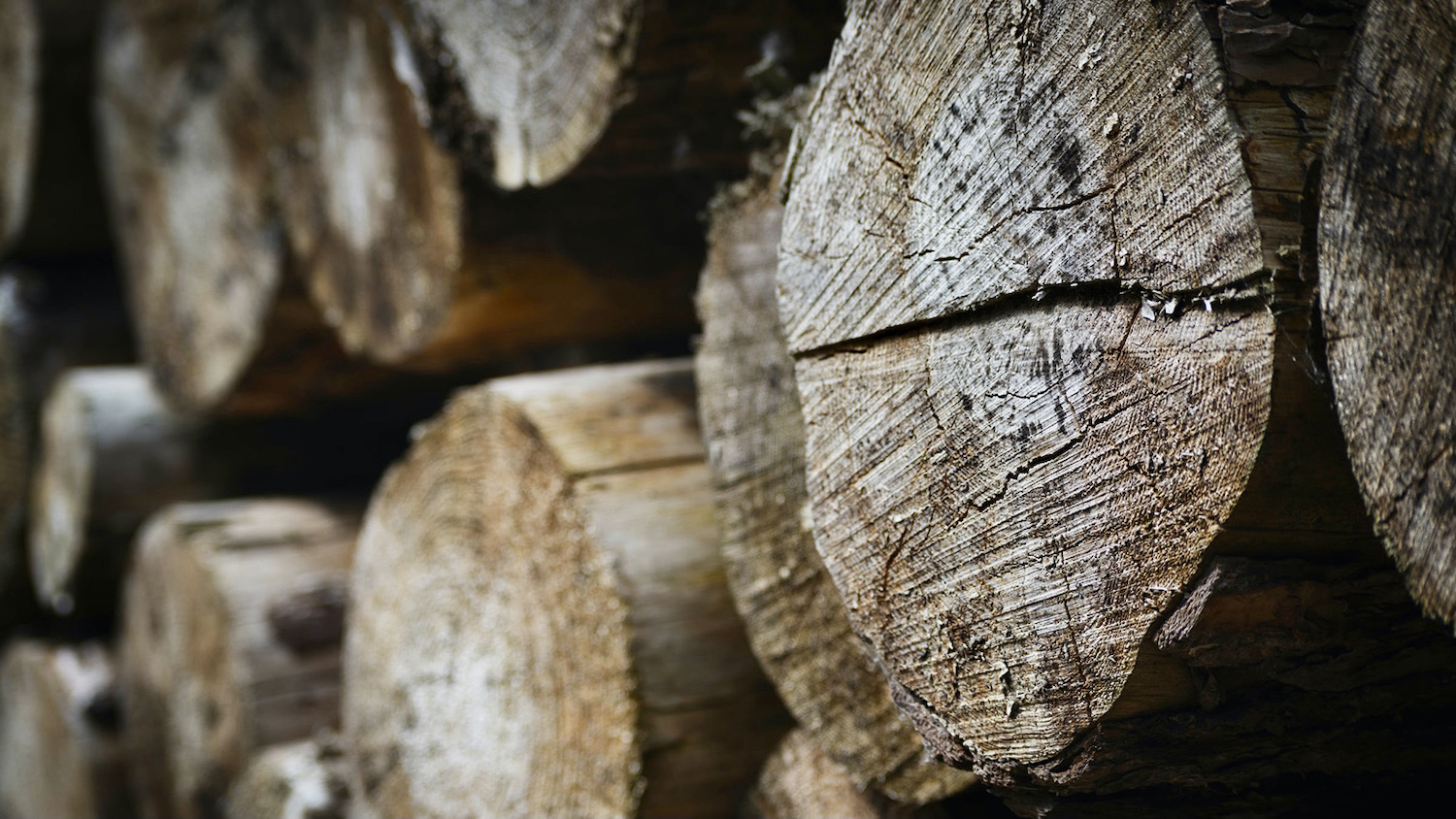 A stack of lumbar - Biomass: A Sustainable Energy Source for the Future? - College of Natural Resources at NC State University