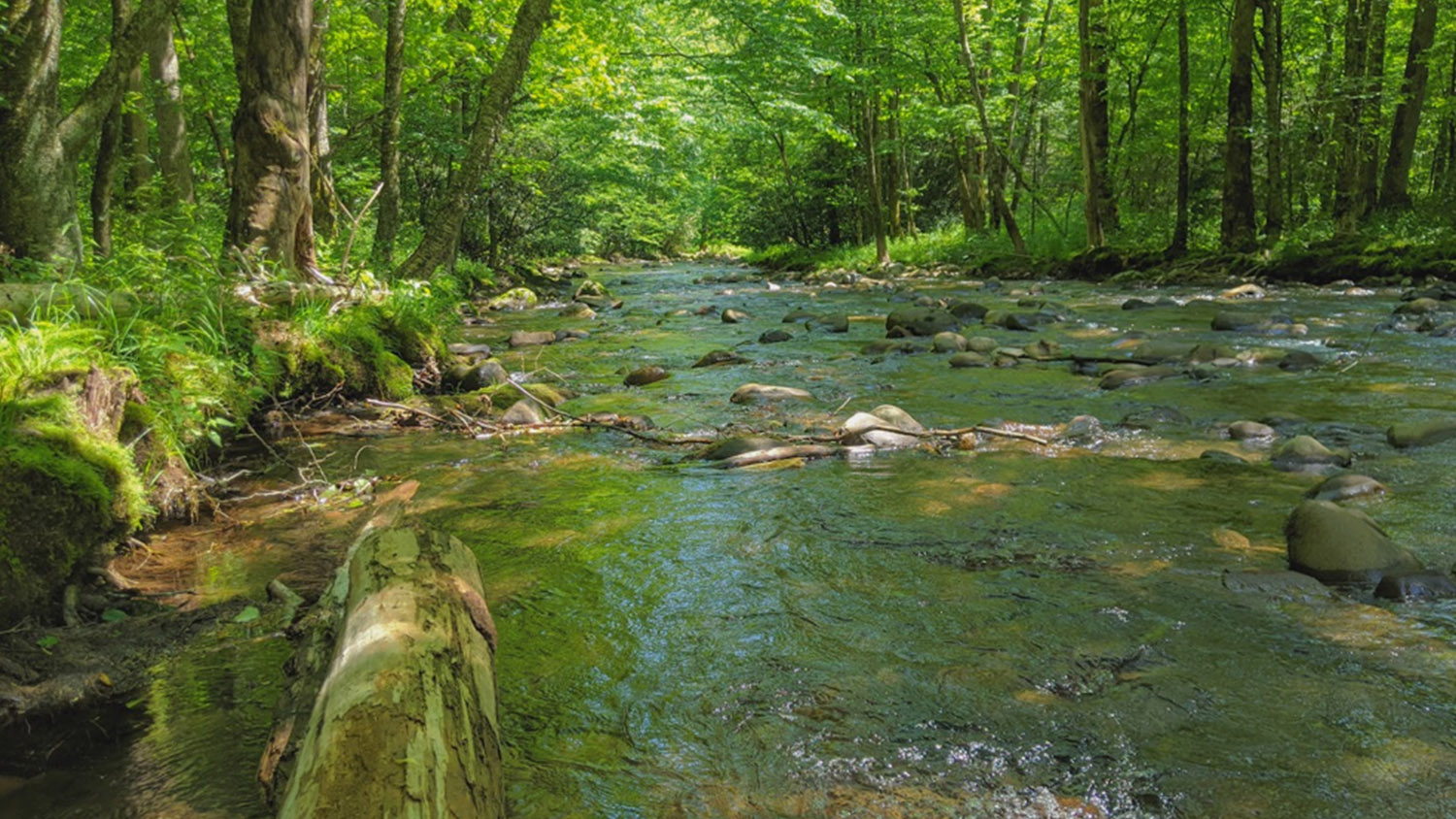 McIntire Stennis - Climate Adaptive Management for Forest Ecosystem Services: An Assessment of Future Forests - College of Natural Resources at NCState