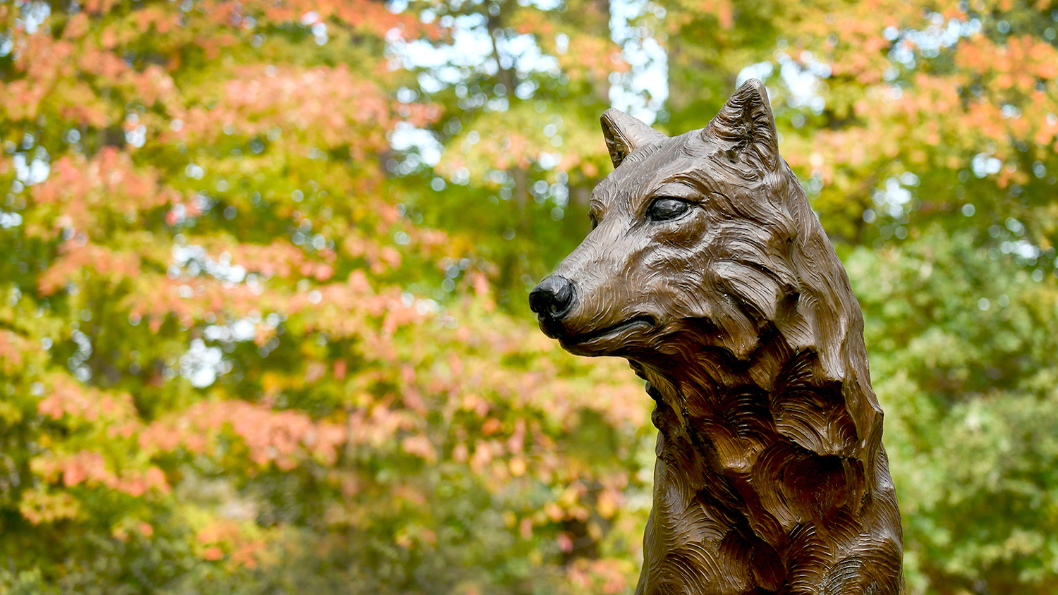 One of the wolf statues at the Park Alumni Center stands in front of fall leaves.